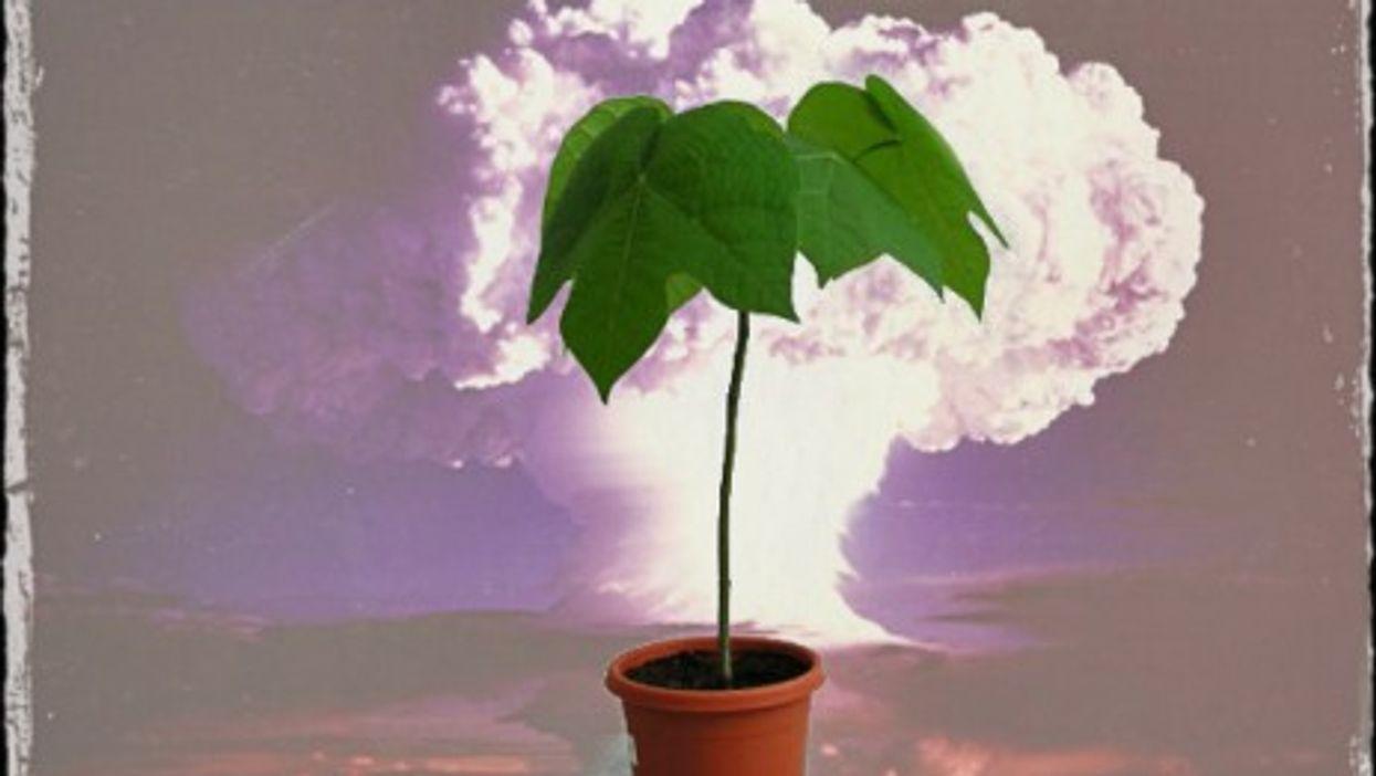 "Hibaku Jumoku, the ""survivor trees"""