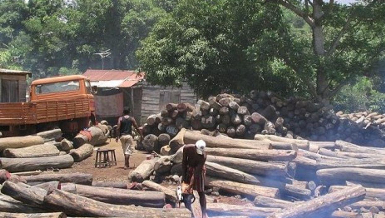 Illegal logging in Madagascar (Erik Patel)