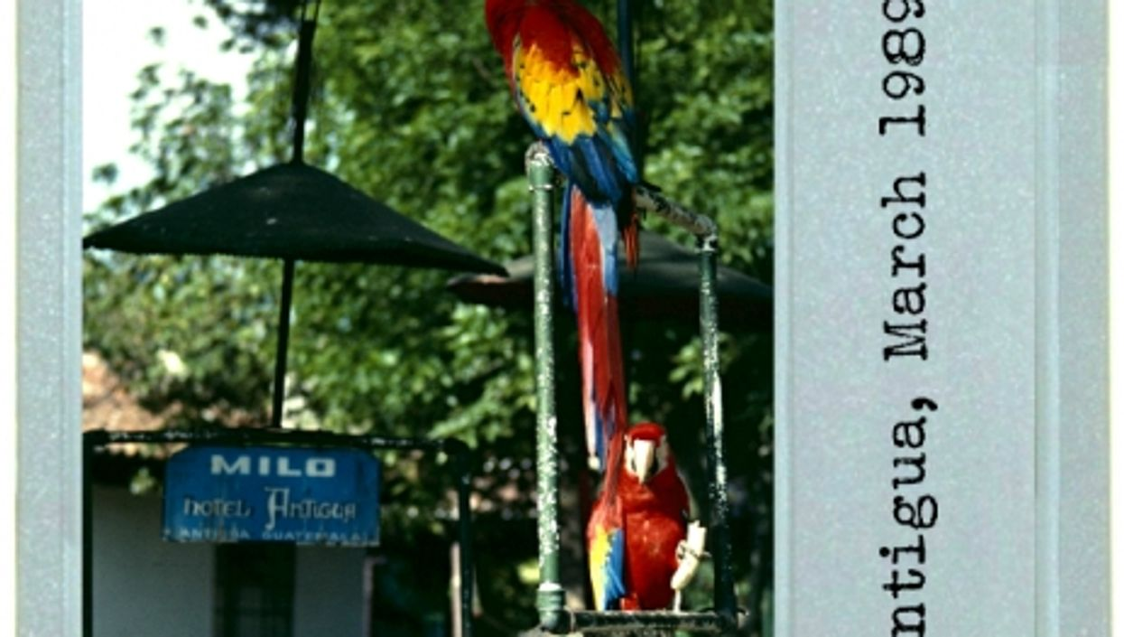 Pigeon v. Macaw