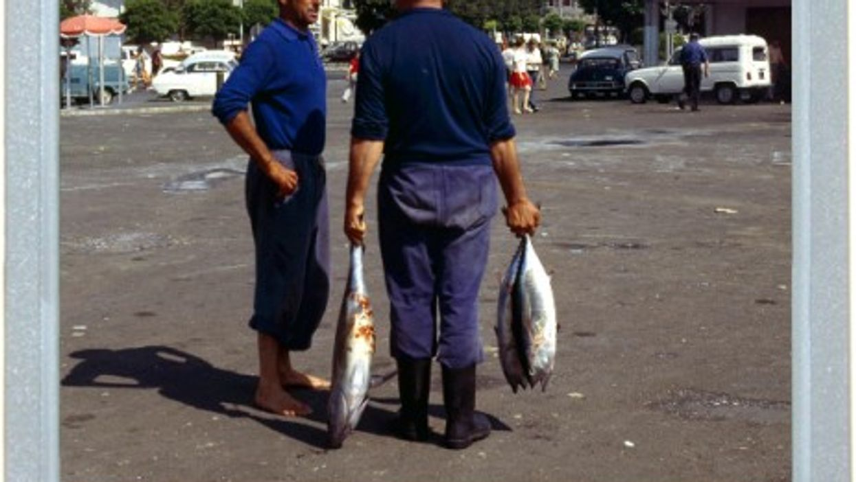 Big Fish In Basque Country