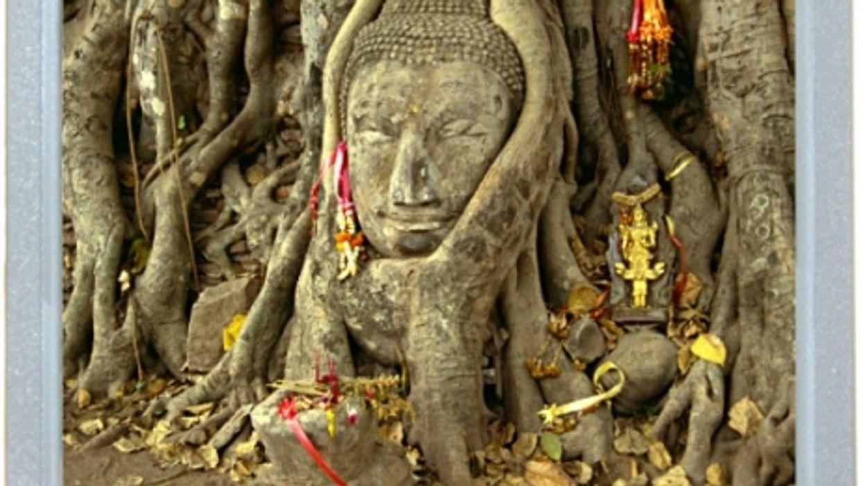 Buddha vs. Banyan