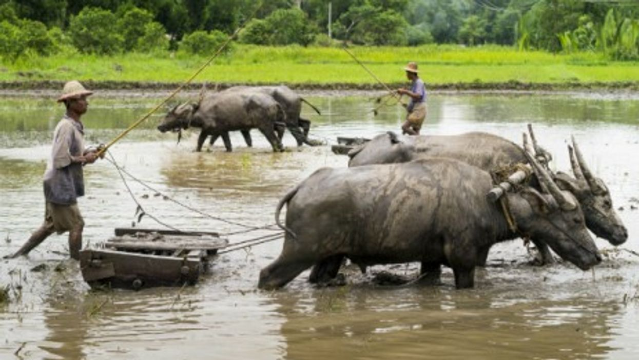 Look Who Pays The Price Of Burma's Investment Fever