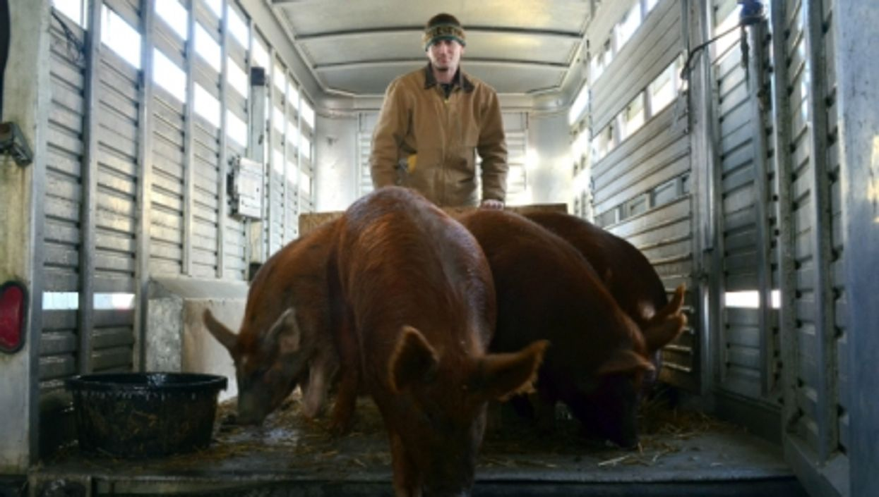 The Importance And Impossibility Of Tracing Your Meat