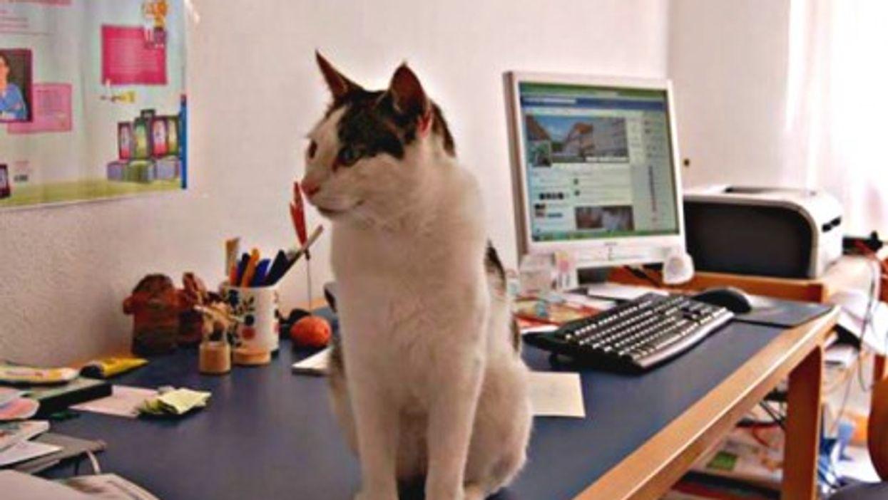 Meet Camillo, Germany's Roaming Facebook Cat