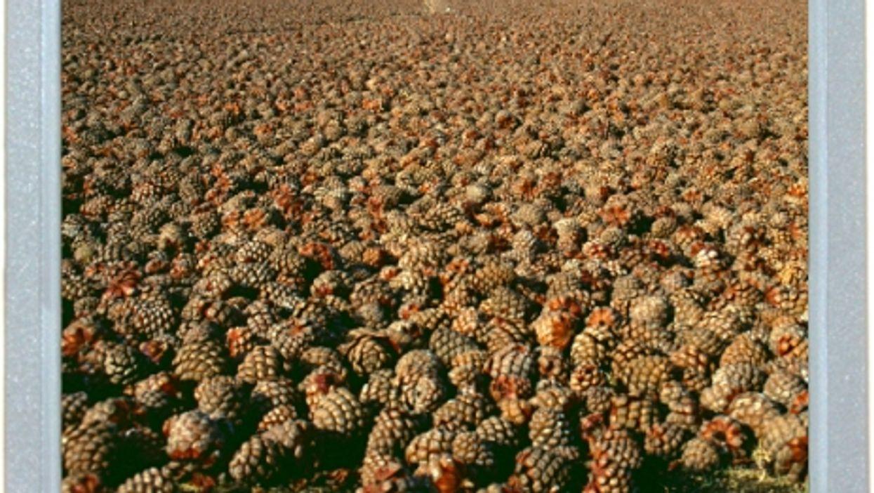 Fields Of Cones