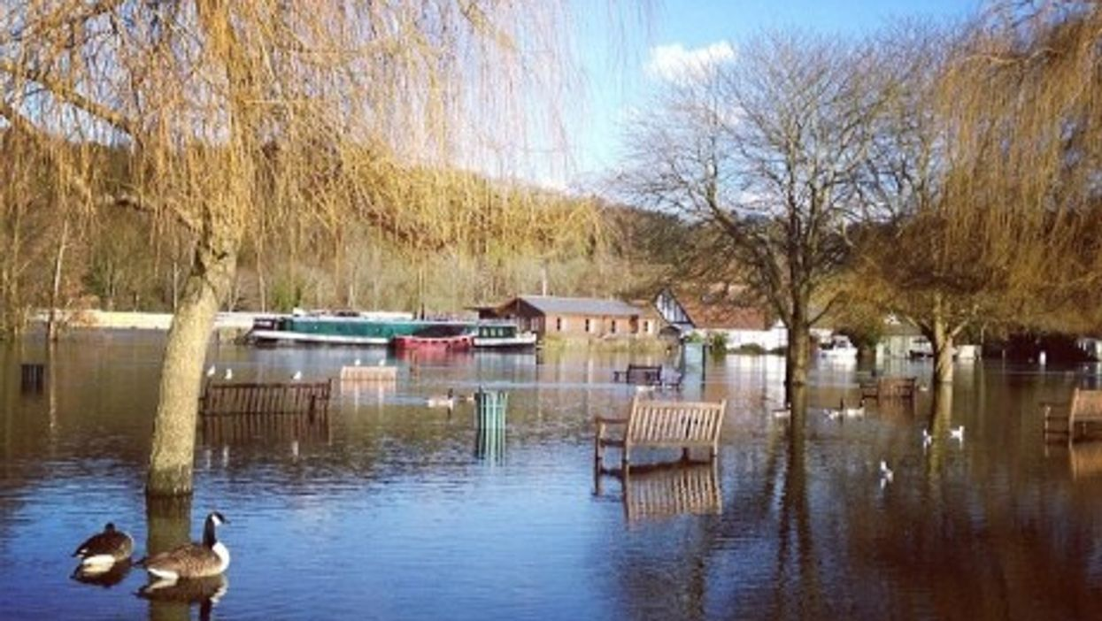 What About The Animals? UK Floods Have Devastating Impact On Nature