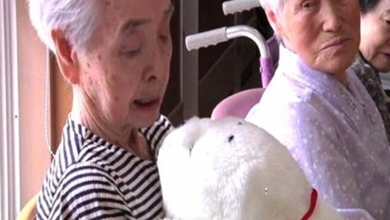 Robotic Seals Help Japanese Tsunami Victims