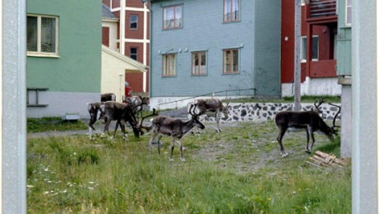 A Norwegian Kind Of Pet