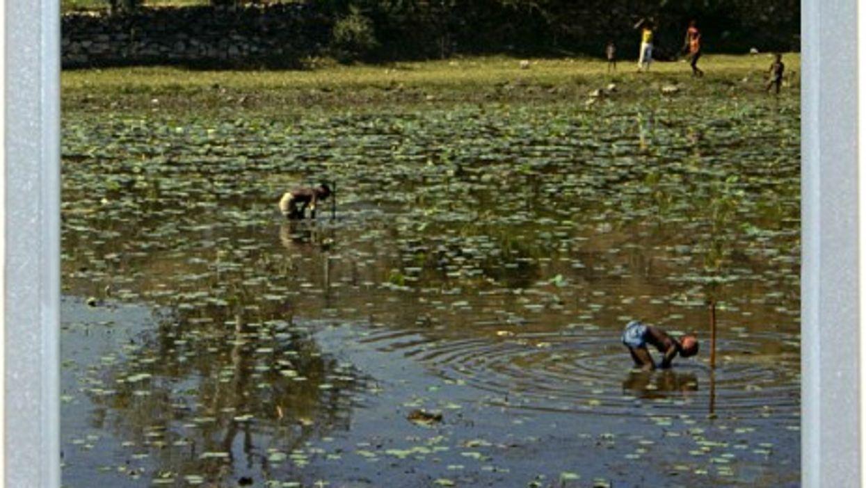 Pond Puzzle