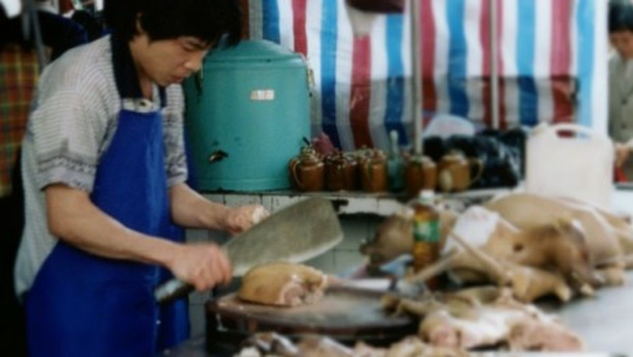 Animal Rights Activists Want To Ban Dog Meat Eating In China