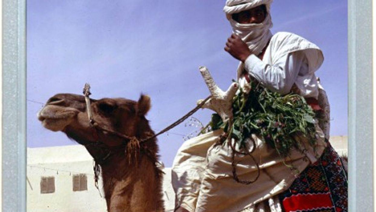 Saharan Fun