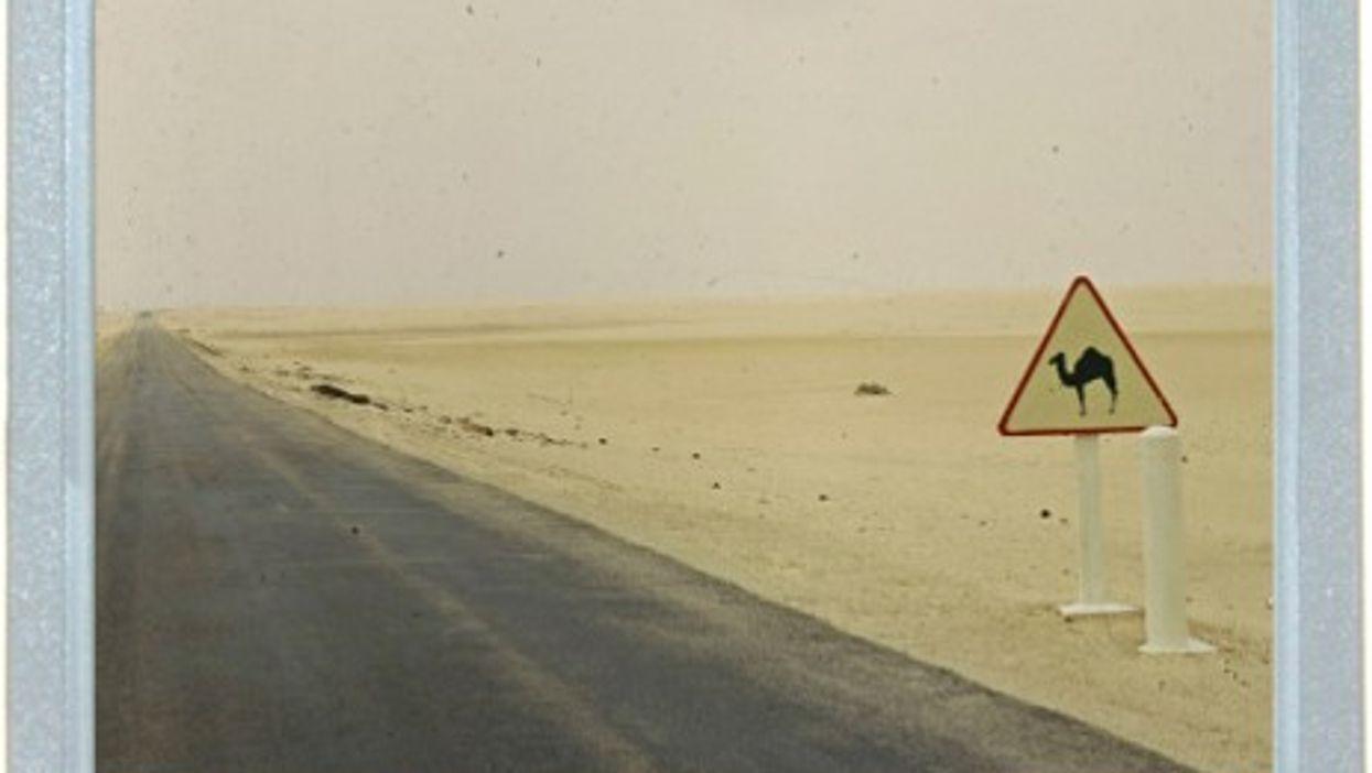 Danger: Camel Crossing