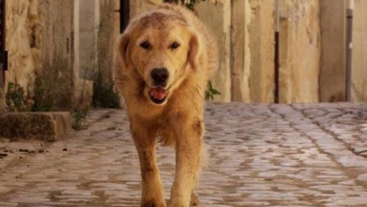 Dog Adopted By Sicilian Town Hits Big Screen