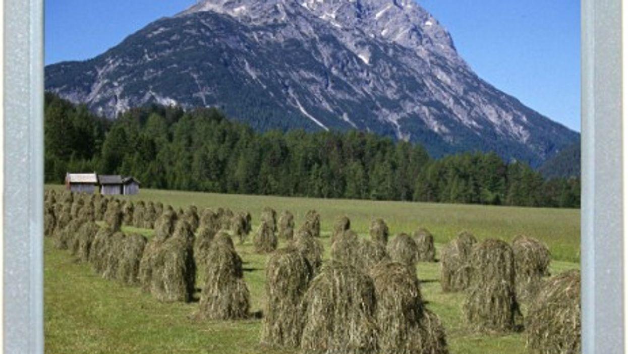 Memories In The Haystacks