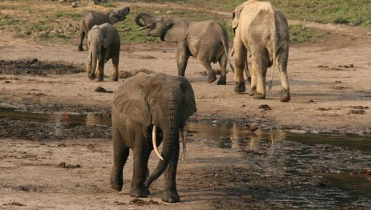 World's Wildlife Plummeting, Human Appetites To Blame