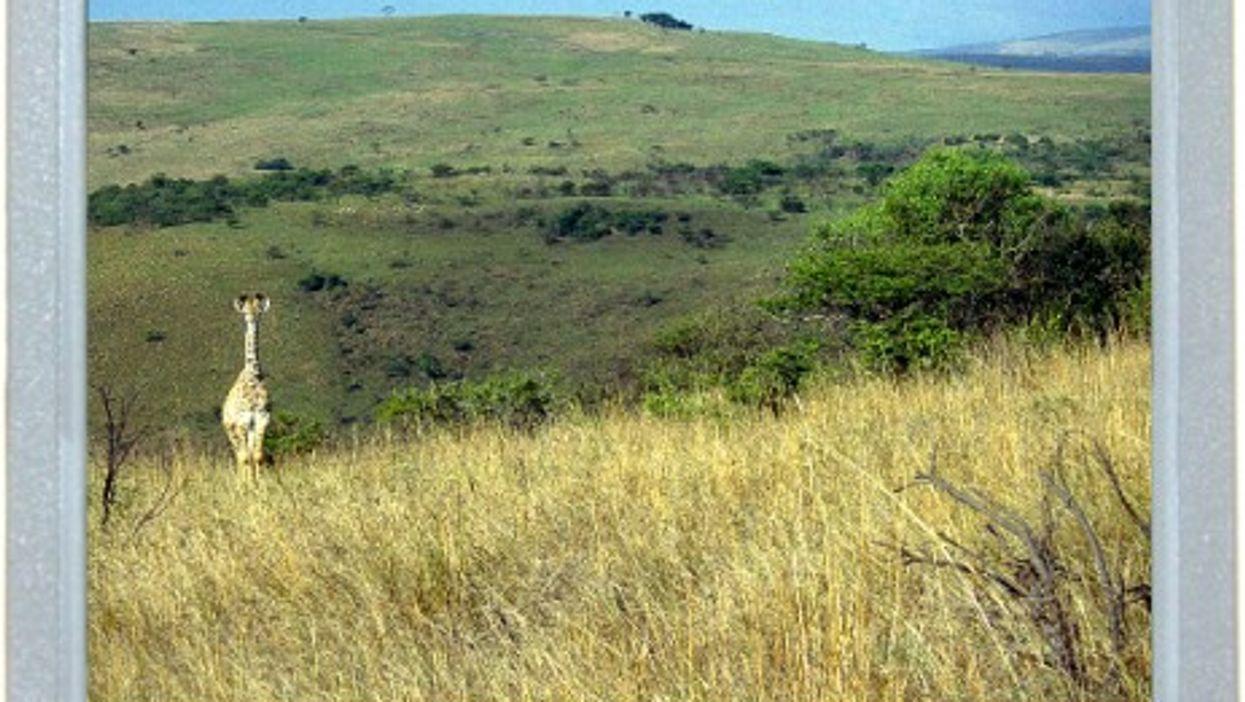 Central Safari