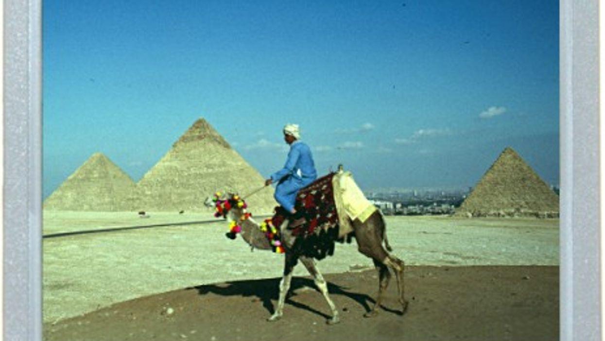 The Pharaoh's Battle