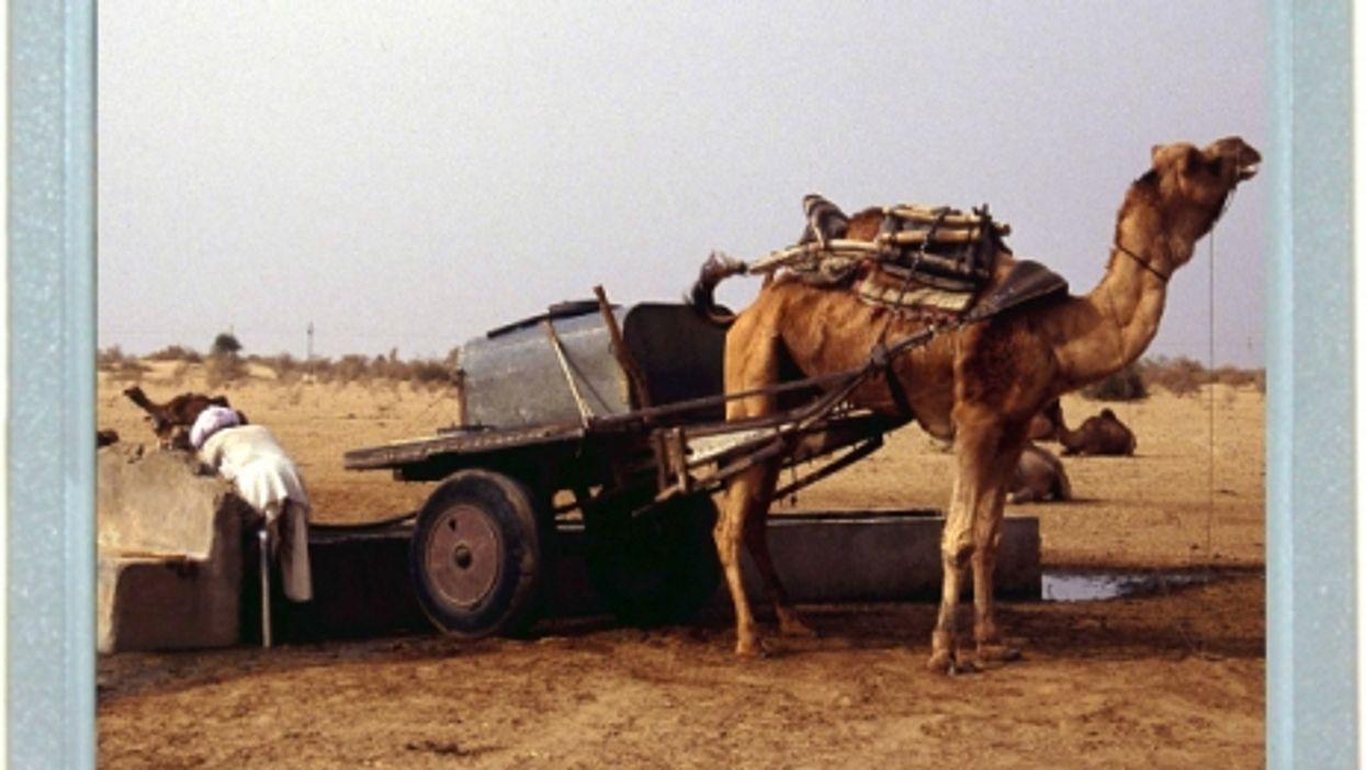 Economical Camel