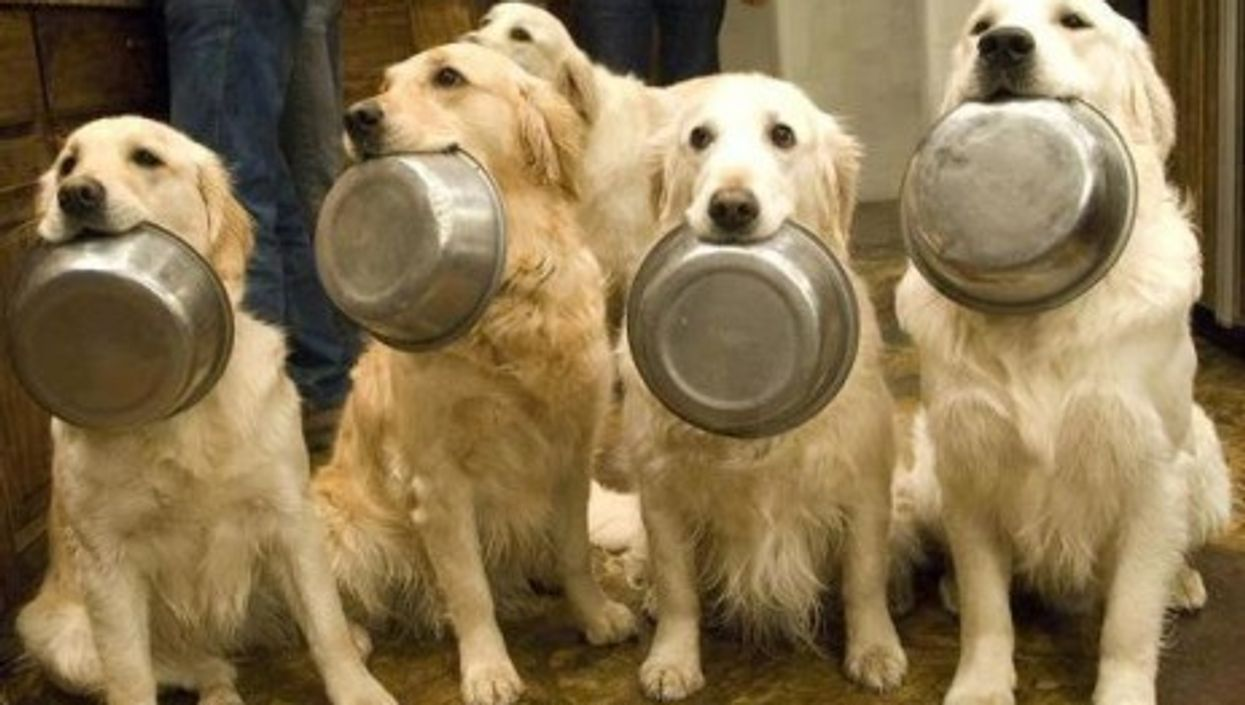 Milan Opens Italy's First Food Bank For Animals
