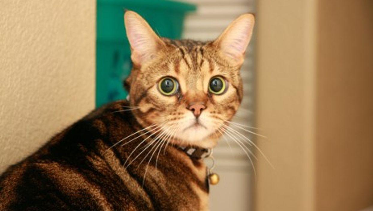 A Catsitter's Morbid Dilemma: She Put It In The Freezer