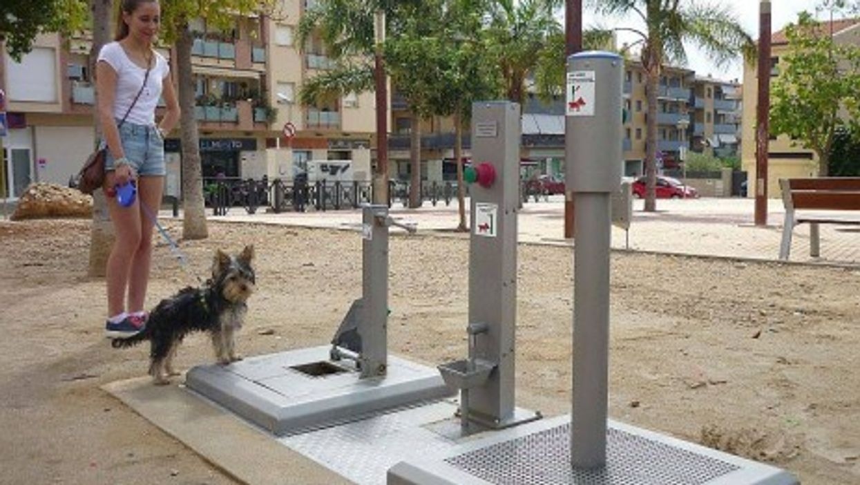 Yes Folks, Public Toilets For Dogs Have Arrived