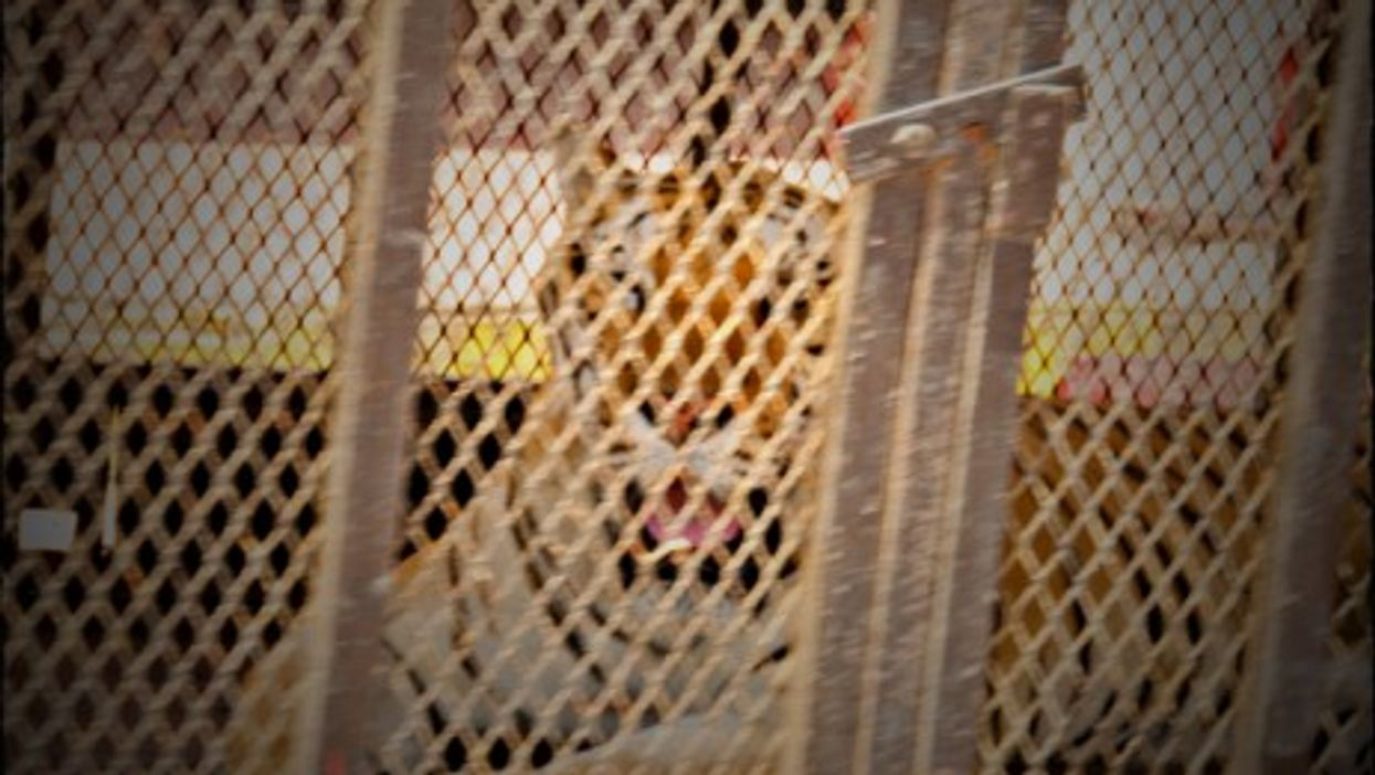 Mexico Bans Jungle Animals In Circuses