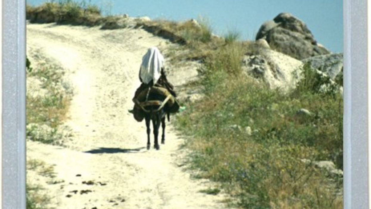 The Road Back To Turkey