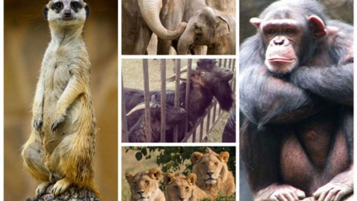 Ukraine Zoo Out Of Money, Animals Begin To Starve
