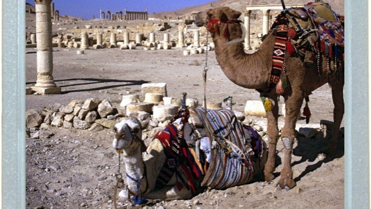 Camel Calm