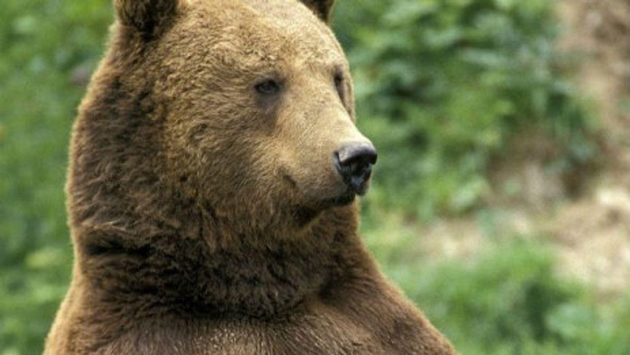 Un-Bear-Lievable
