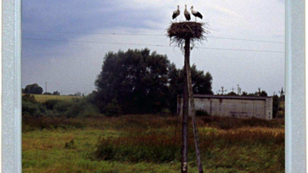 Landlocked Storks