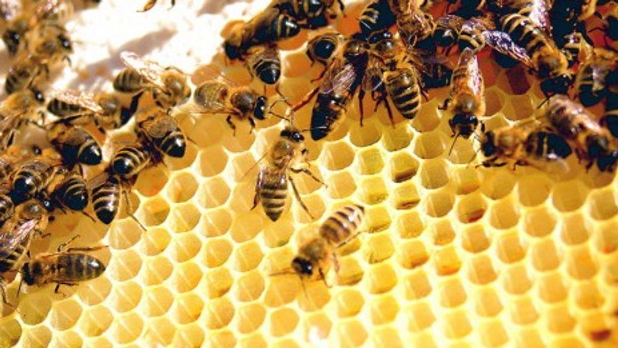 A Sweet Haul: Thieves Raid Australian Beekeepers' Hives