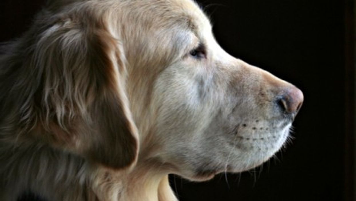 Aches And Pets: How Your Dog Can Help Treat Arthritis