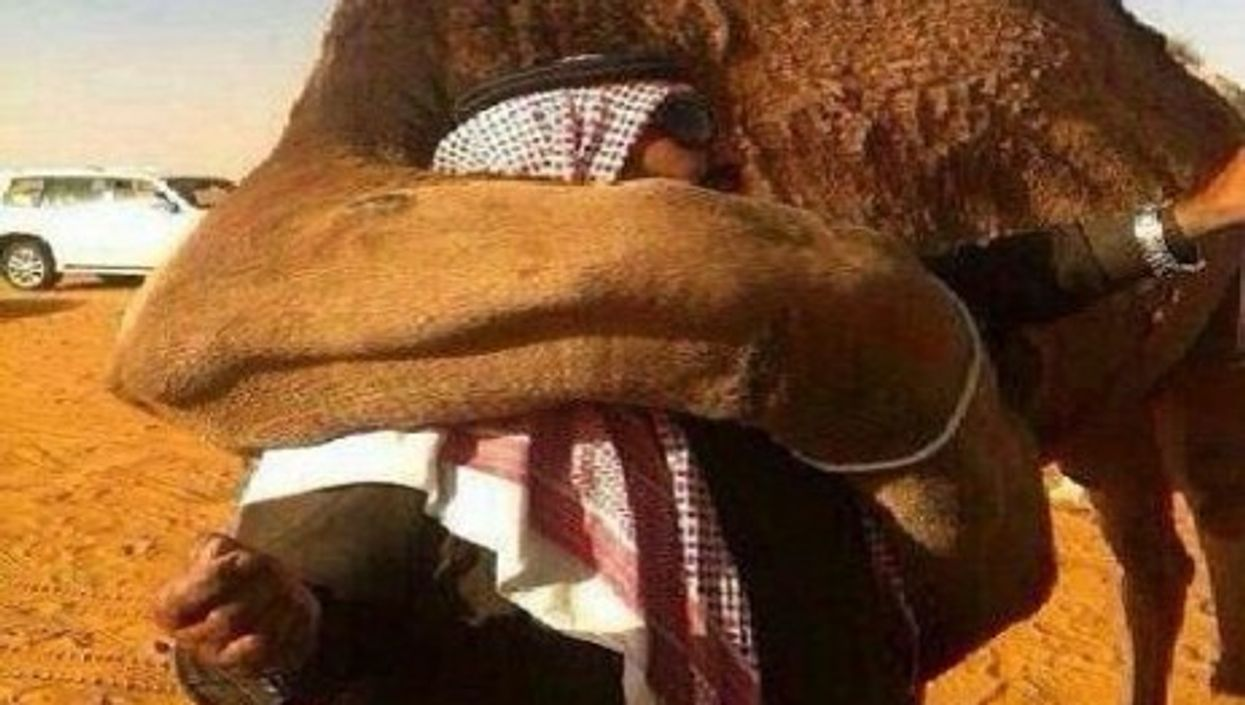 Maybe You Thought A Camel Couldn't Break Your Heart
