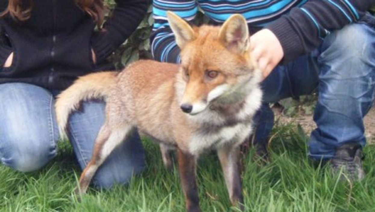 French Family Wins Fight To Keep Pet Fox
