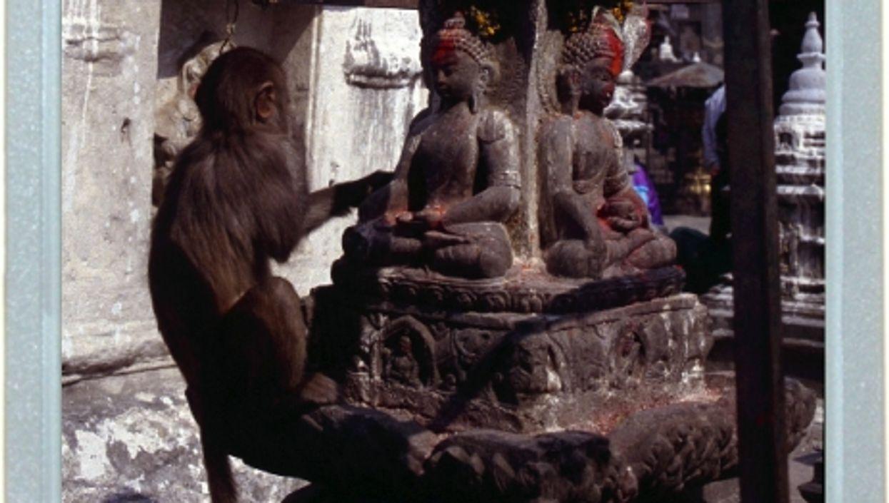 Praying Primate