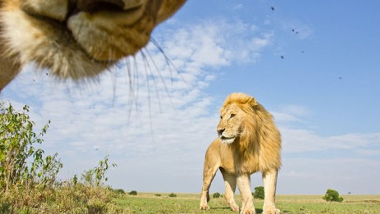 King Of The Animals, Queen Of The Photobombs