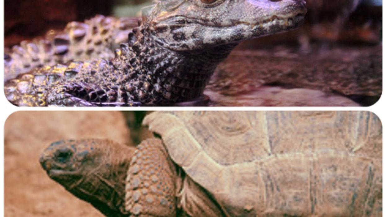 Traffickers Nabbed, 1,500 Tortoises Won't Be Eaten