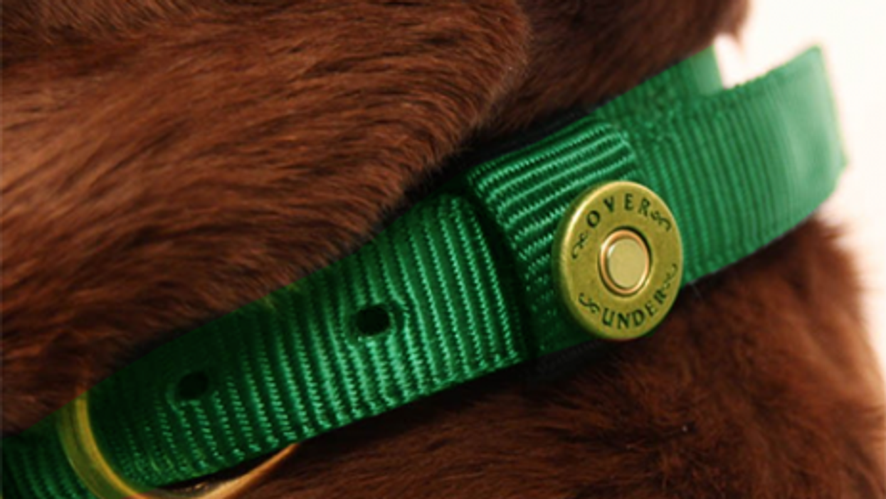 Buenos Aires Mayor Wants To Give Green Collars To Good Dogs