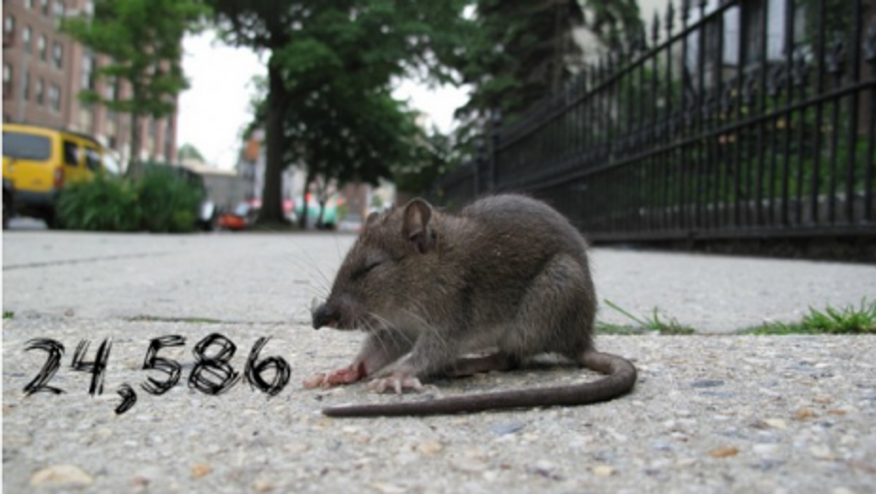 By The Numbers: Ancient Bogota, NYC Rats, Ebola Cures