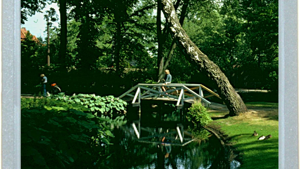 Leaning Tree Of Denmark
