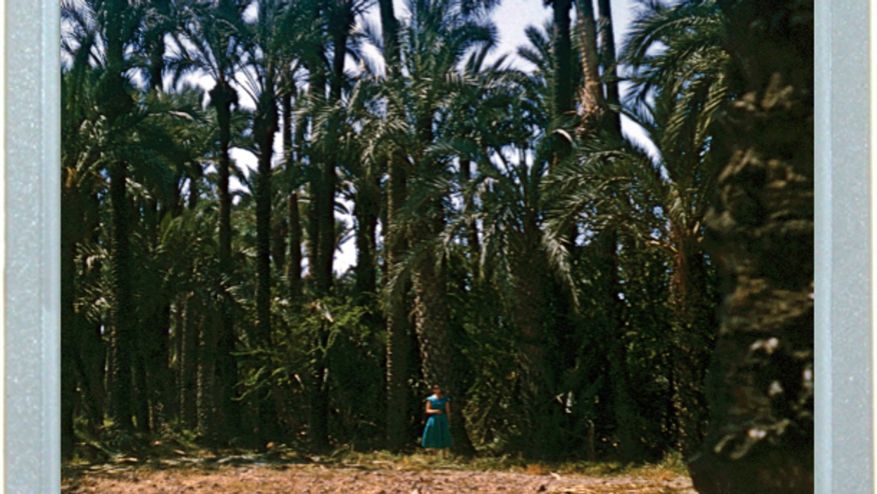 Palm Color