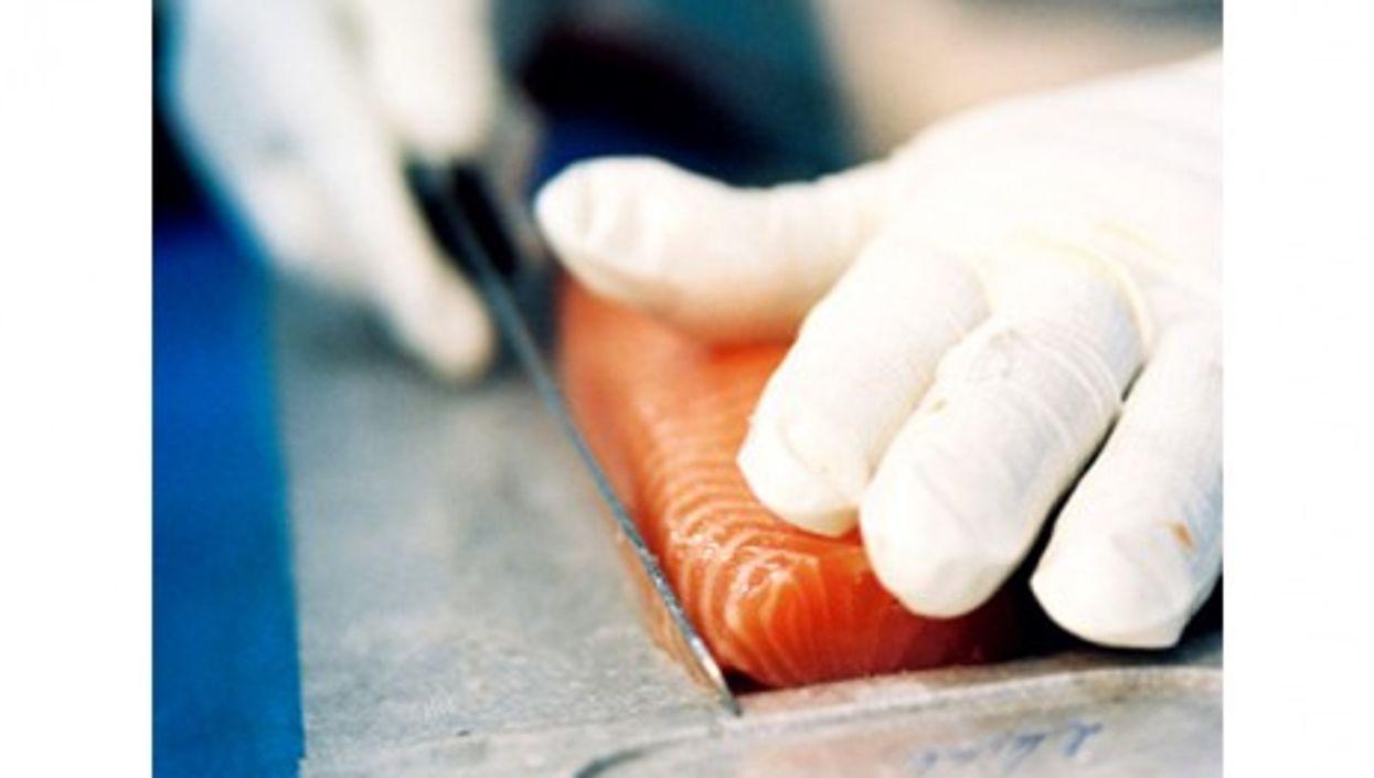 Knife expert slice the salmon at Balik farm (maiak.info)