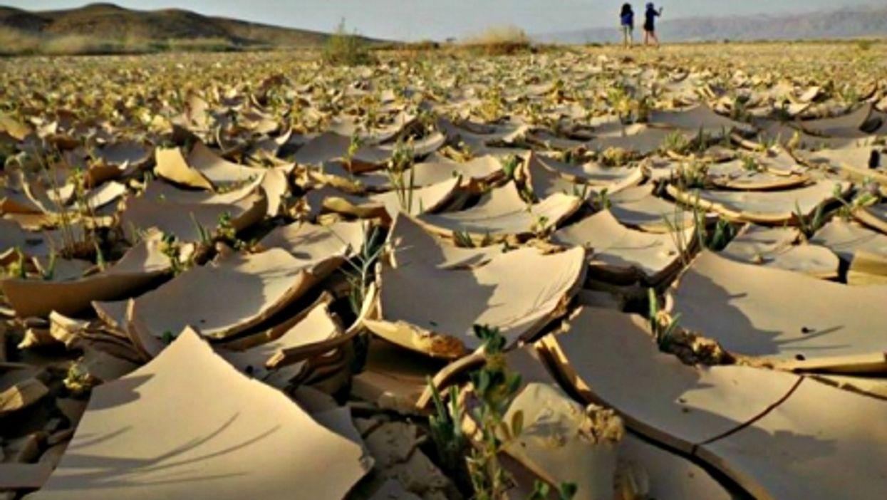 Life in Israel's Negev desert