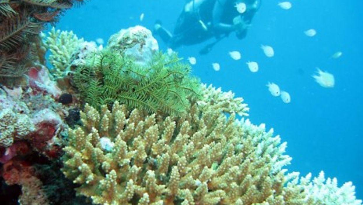 Live coral in the Maldives