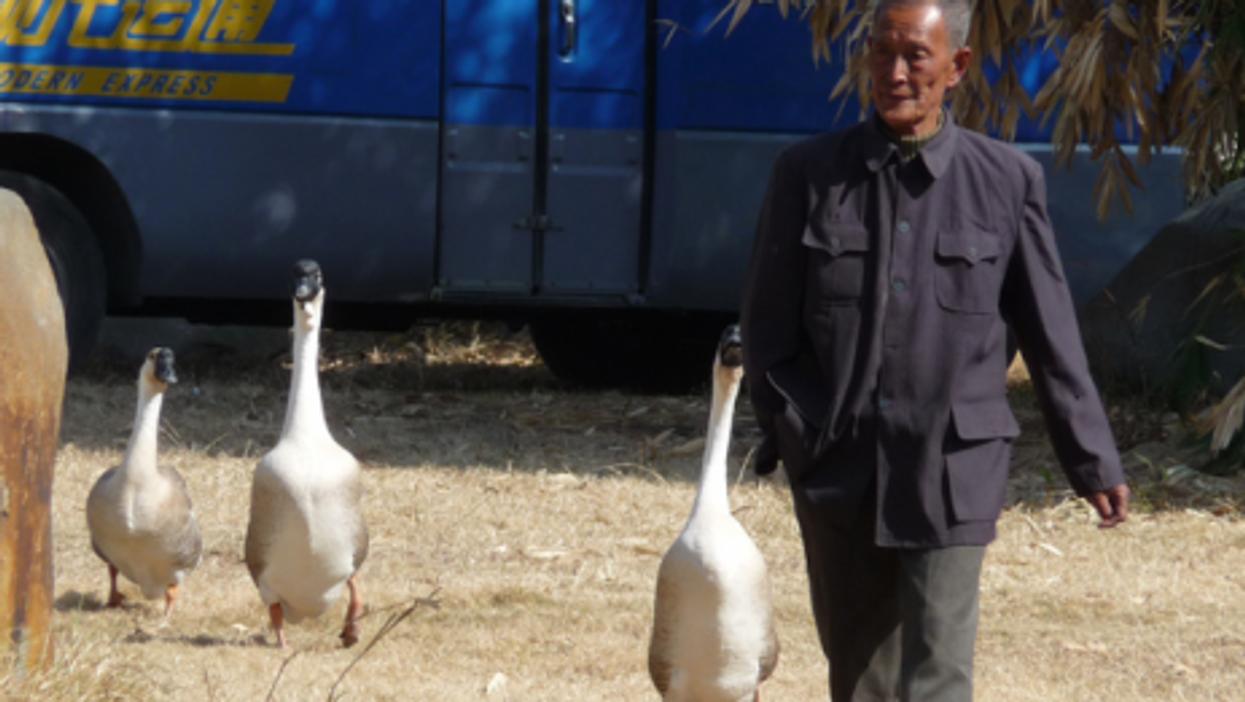 Man and geese (Denn)