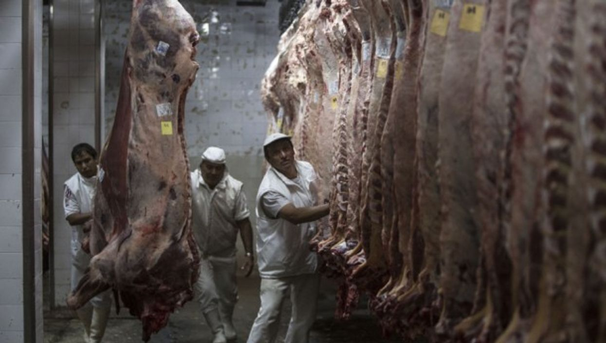 Meat handing in an Argentinian slaughter house