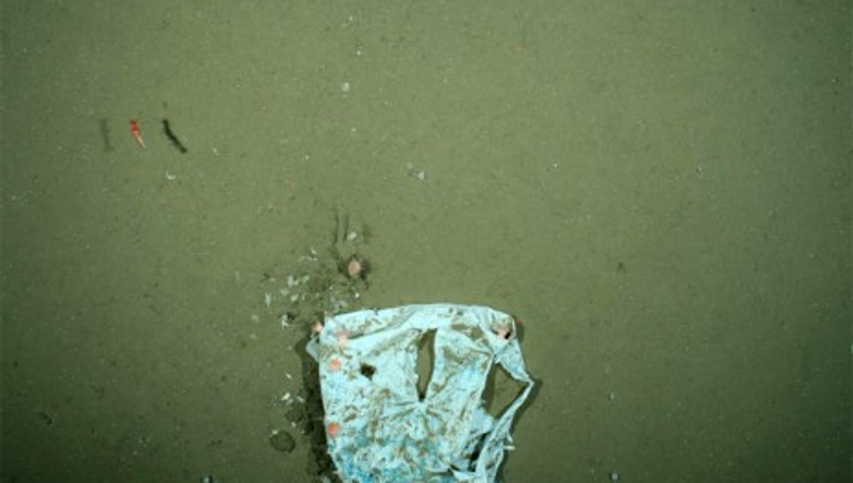 New plastic bags are found everyday on the floor of the Arctic Ocean