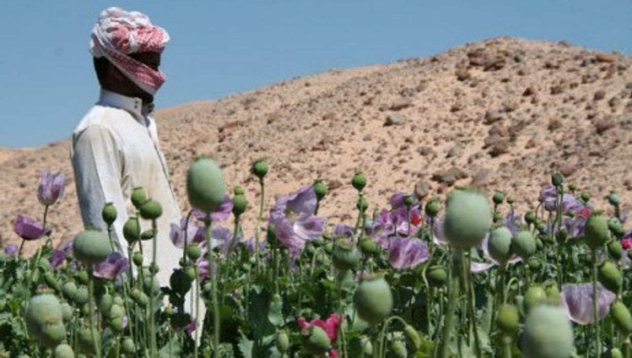 Opium field in the Egyptian Sinai Peninsula