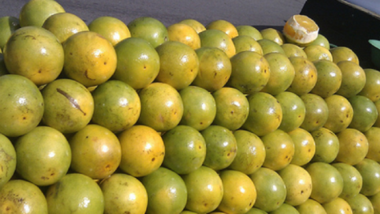 Oranges at the market in Sumaré, São Paulo (Mark Hillary)